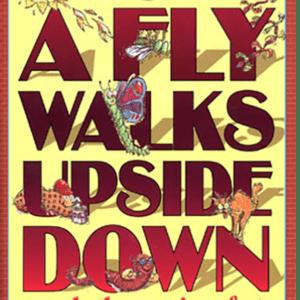 How a Fly Walks Upside Down
