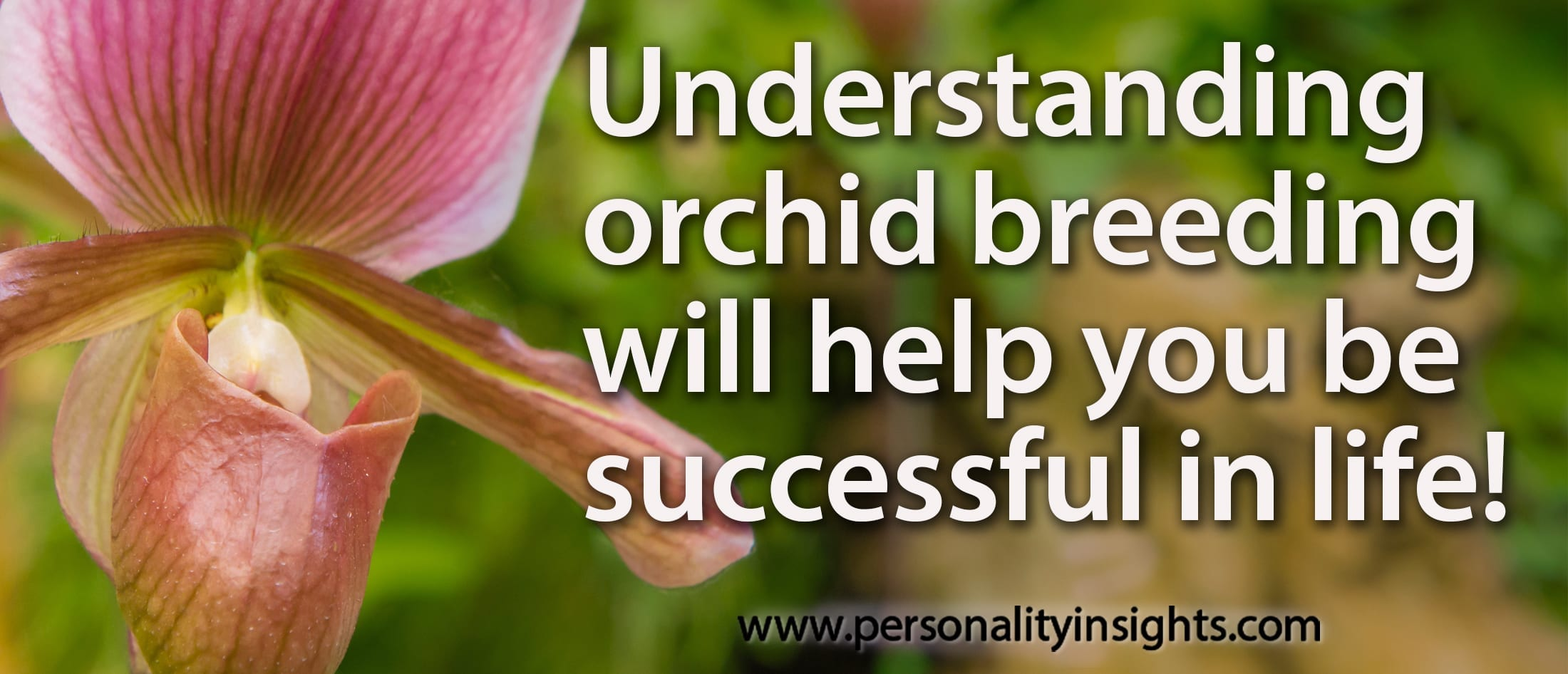 Tip: Understanding Orchid Breeding Will Help You Be Successful In Life!